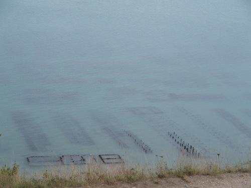 Les huîtres de Cancale dans leurs parcs. Règle de Saint-Benoît obligatoire pour tout le monde.