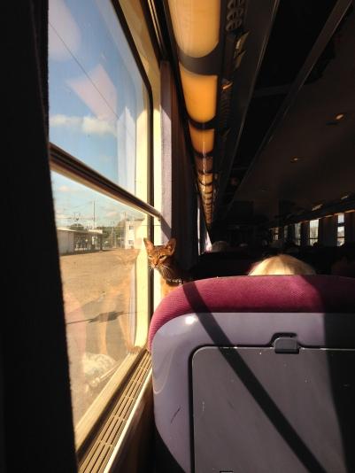 Un chat à bord du train intercité Saint-Lazare - Deauville, venu retrouver ses origines normandes. Il paraît aussi qu'un wapiti a essayé de voyager illégalement sur le toit. Malheureusement il serait tombé en gare de Lisieux.
